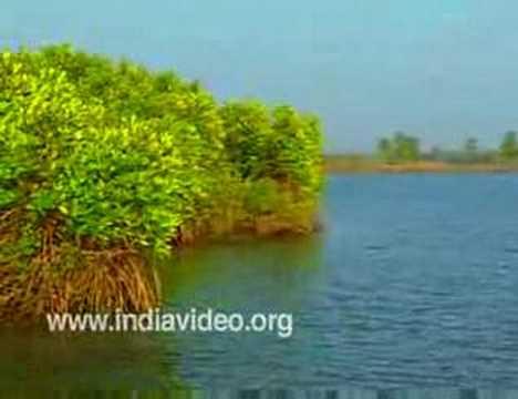 Thrissur, Chettuva Backwater, Kerala