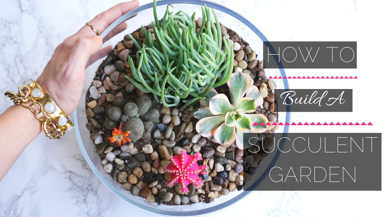 How To Build A Mini Succulent Garden