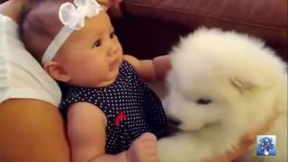 Perros conociendo a bebes por primera vez - Dogs meeting babies first time