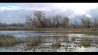 Aquatic Biomes Wetlands | Biology | Ecology