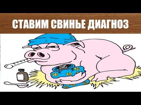 Болеют вьетнамские свиньи африканской чумой