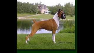 افضل فيديو كلاب فى العالم