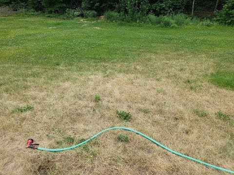 How To Check Your Lawn For Chinch Bugs