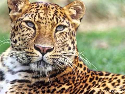 Endangered Species Photo Essay