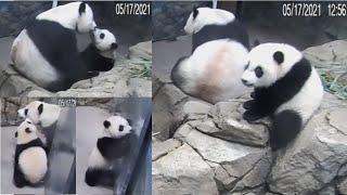 2021-05-17 Xiao Qi Ji ~ Precious, Peaceful, Picturesque Moments