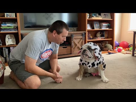 Reuben the Bulldog: Happy Halloween?