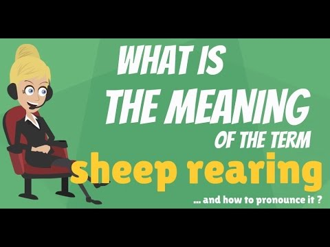 What Is Sheep Rearing What Does Sheep Rearing Mean Sheep Rearing Meaning Explanation