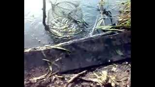 Рыбалка с ужом-2. Гость.