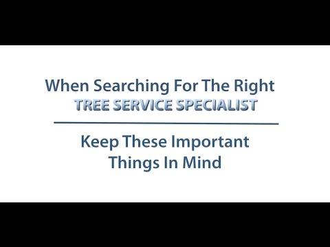Tree Specialist Longview TX