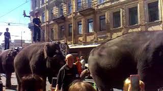 Парад слонов в Санкт-Петербурге на день города 27 мая 2018