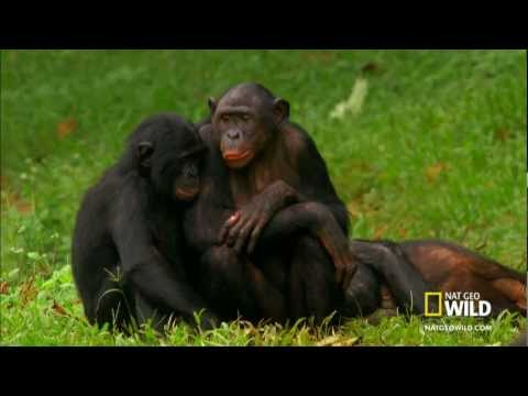Monkey sex on car very funny ;) from YouTube · Duration:  31 seconds
