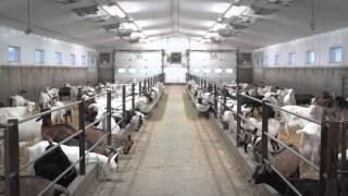 Capsule chèvre laitière