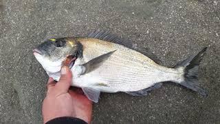 Canakkale cupra avı