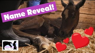 Foal Name and Gender Reveal!