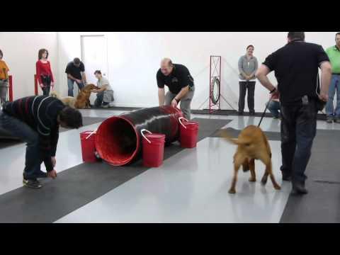 Thumbnail for Centre Canin Laval et Dressage de chien