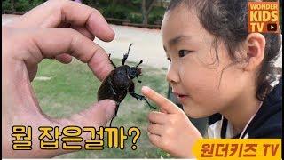 뭘 잡은걸까? 장수풍뎅이 구출작전. 사슴벌레 VS 장수풍뎅이 곤충잡기 Insect learning l spider insect