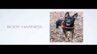 How Quickly Does Dog Training Work - Free Trial Dog Training