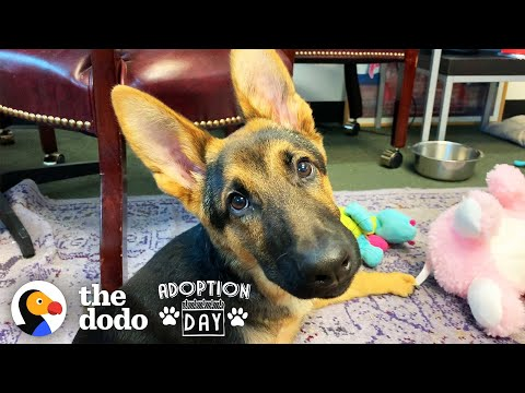 Very Special German Shepherd Puppy Finds A Brother Who Just Gets Him | The Dodo Adoption Day