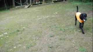 「sennen hund」セネフント http://sennenhund.jp/ 何処へ行ってもやる...