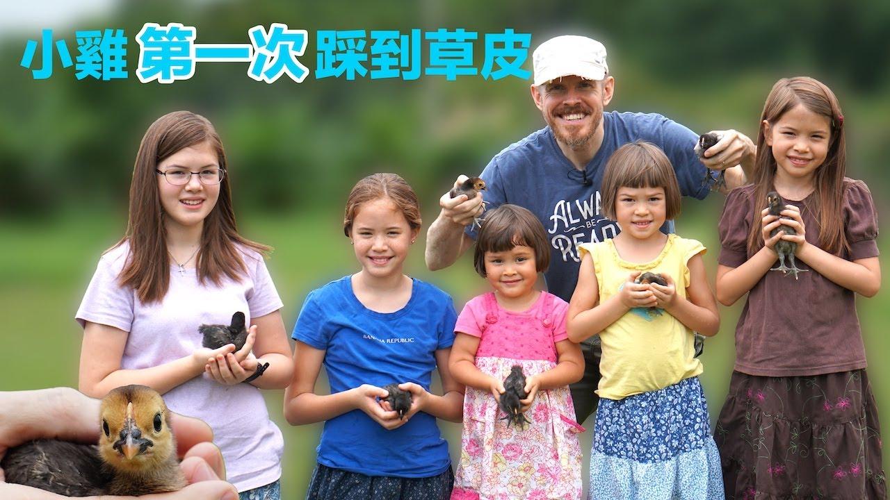 小雞戶外教學:它們第一次踩到草皮 (A Field Trip for Chicks: First Time to Touch the Grass)