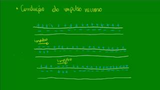 Neurônios - Sinapses e Impulso Nervoso - Fisiologia - Biologia