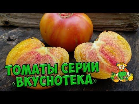 Семена томатов 🍅 Обзор сортов томатов серии ВКУСНОТЕКА 🍅 Агрофирма ПОИСК | вкуснотека | агрофирма | томатов | садовый | хитсад | сортов | семена | огород | вкусно | серии