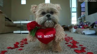 Happy Valentine's Day from Munchkin!