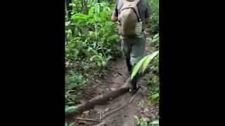 Peru - Amazon Forest