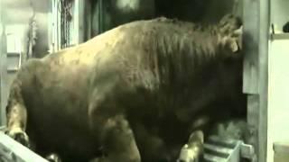 Tierquälerie Pelze Hundemassaker Ölkatastrophe Regenwaldabholzung Schlachtung Delfinshows Zoos