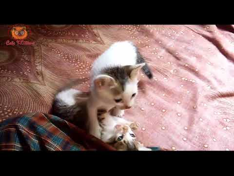 Adorable Cute Kittens Compilation | Cats and Kittens Video 2018