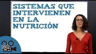 La importancia en sistema nutricion circulatorio del