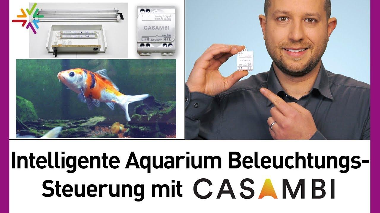 Aquarium Beleuchtung selber bauen – Intelligente Beleuchtungssteuerung mit Casambi