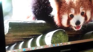 Fixing HDMI Problem blurry and out of focus Monitor