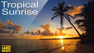 Download 8 HOURS 4K Tropical sunrise beach relaxation video Relaxing Sounds Calm Ocean Waves & Singing Birds