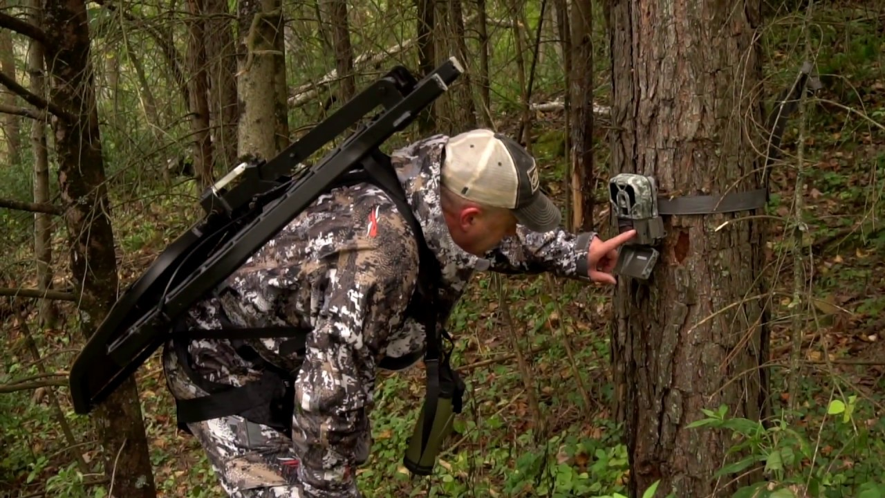 Public Land Buck Bed Hunting   Whitetail Habitat Solutions
