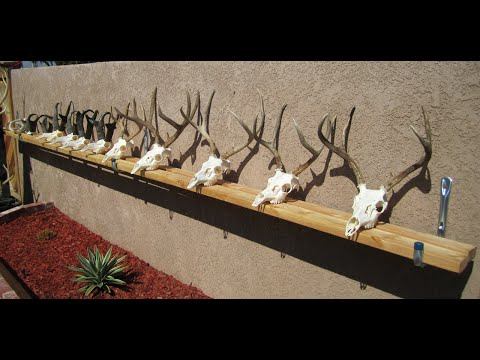 "HOW TO CLEAN A DEER  SKULL ""GRAPHIC"" EASY PROFFESIONAL EUROPEAN METHOD )"