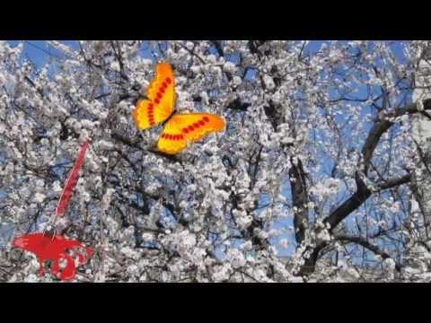 Весна картинки Анимационные блестящие картинки GIF