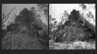 The Magical Forest – Sinikka Langeland