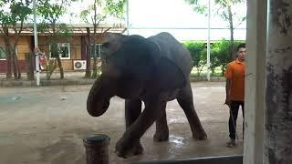 слон танцует Опа гамна стайл