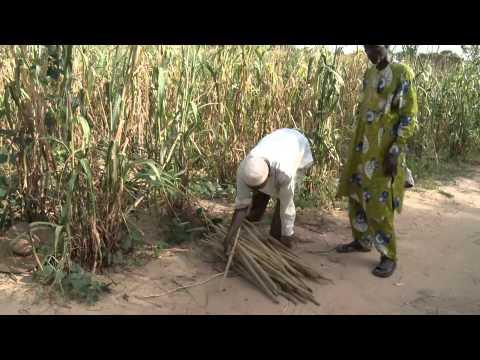 Cultiver ensemble - L'intensification agricole au Niger