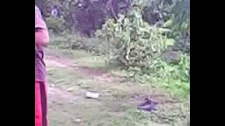BEST FIGHT IN BUKID