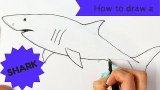 Beginners - How to Draw a Great White Shark