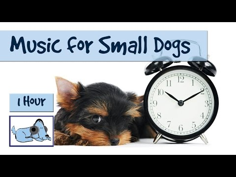 1 Hour of Relaxing Music for all Dog Breeds, Chihuahua, Pug, Chinese Crested etc 🐶 #FLATNOSE07