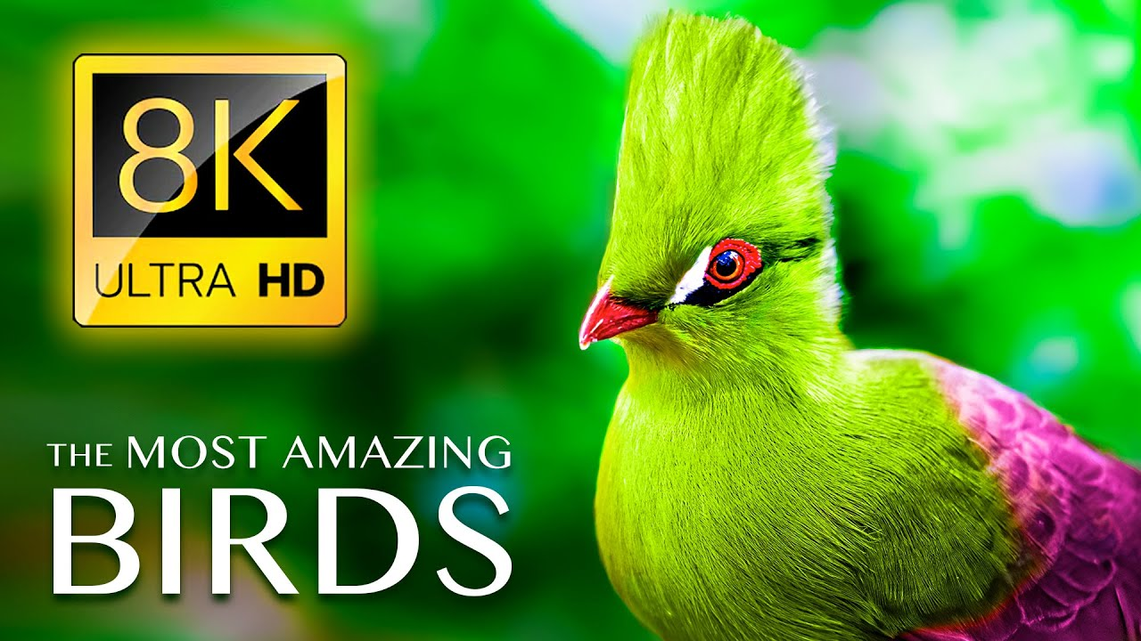 The Most Amazing BIRDS in the World 8K ULTRA HD - Relaxing Music and Nature Sounds 8K TV