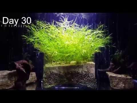 how to make co2 for aquarium plants
