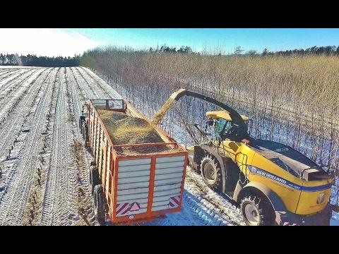 Winter poplar harvest New Holland FR780 RRD Japonský topol + Massey Ferguson 7620 - Romill 43m3