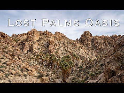 lost-palms-oasis-hike-in-joshua-tree-national-park