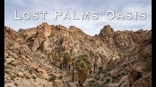 Lost Palms Oasis Hike in Joshua Tree National Park