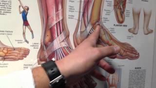 Tobillo izquierdo en el y dolor pie el