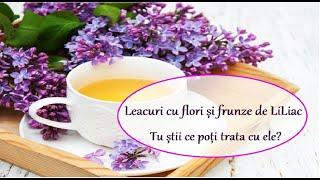 Leacuri cu flori și frunze de LiLiac, Tu știi ce poți trata cu ele? |Leacuri&Sfaturi Despre Sanatate